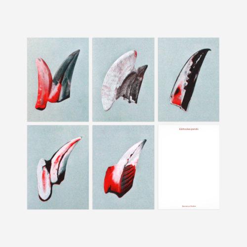 postcards of beaks from Hornbill birds