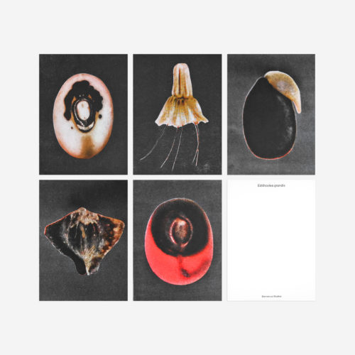 beautiful shaped seed postcards