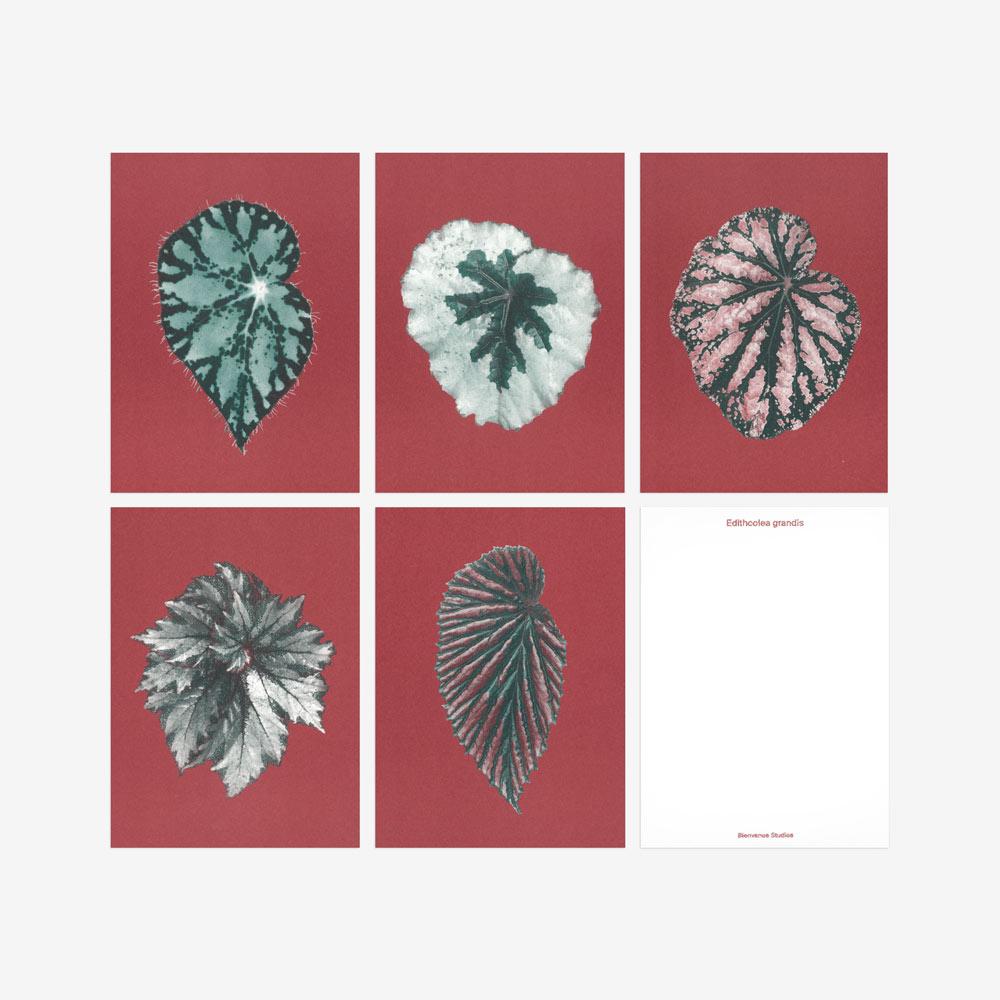 Leaves of Begonias postcards