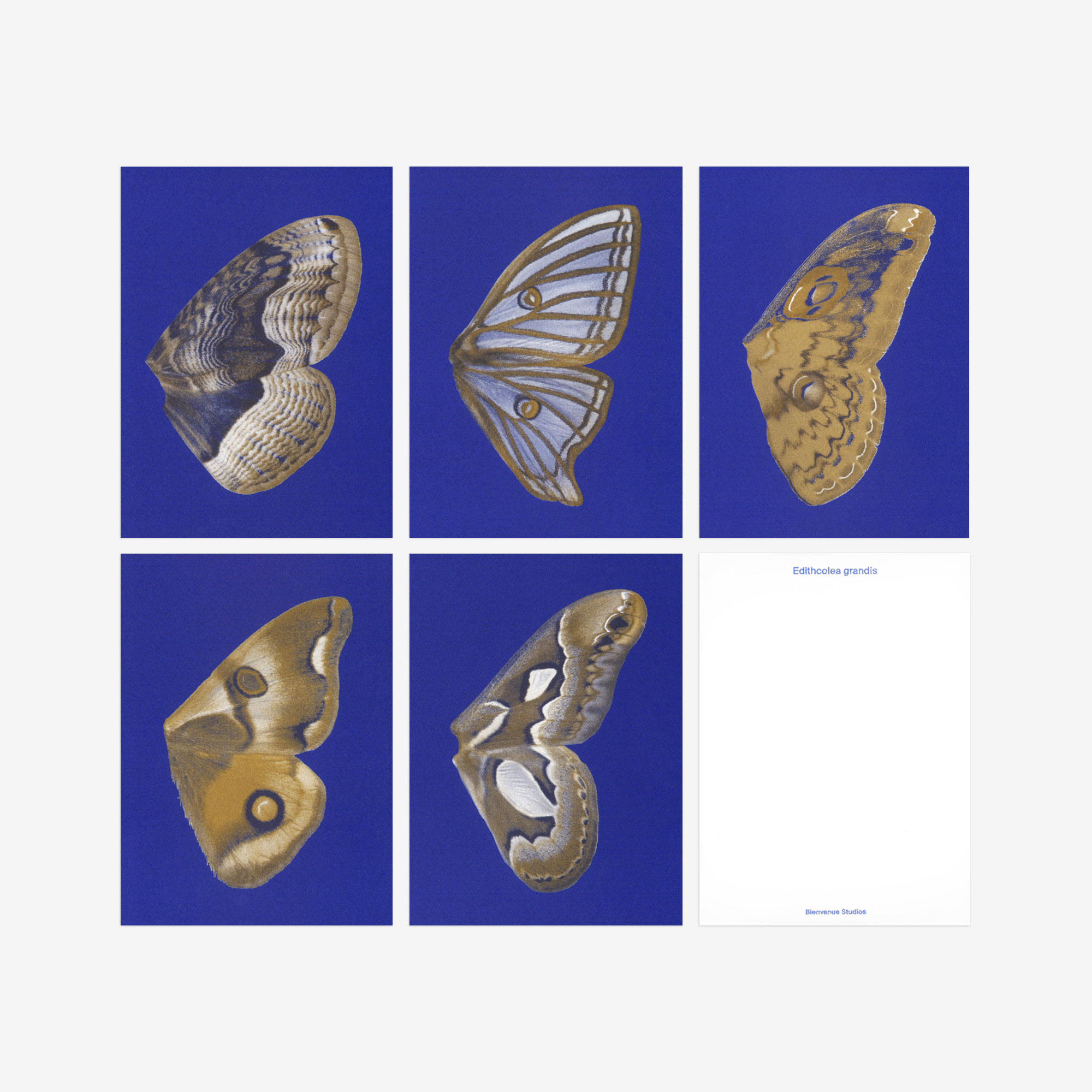 Blue butterfly wing postcards