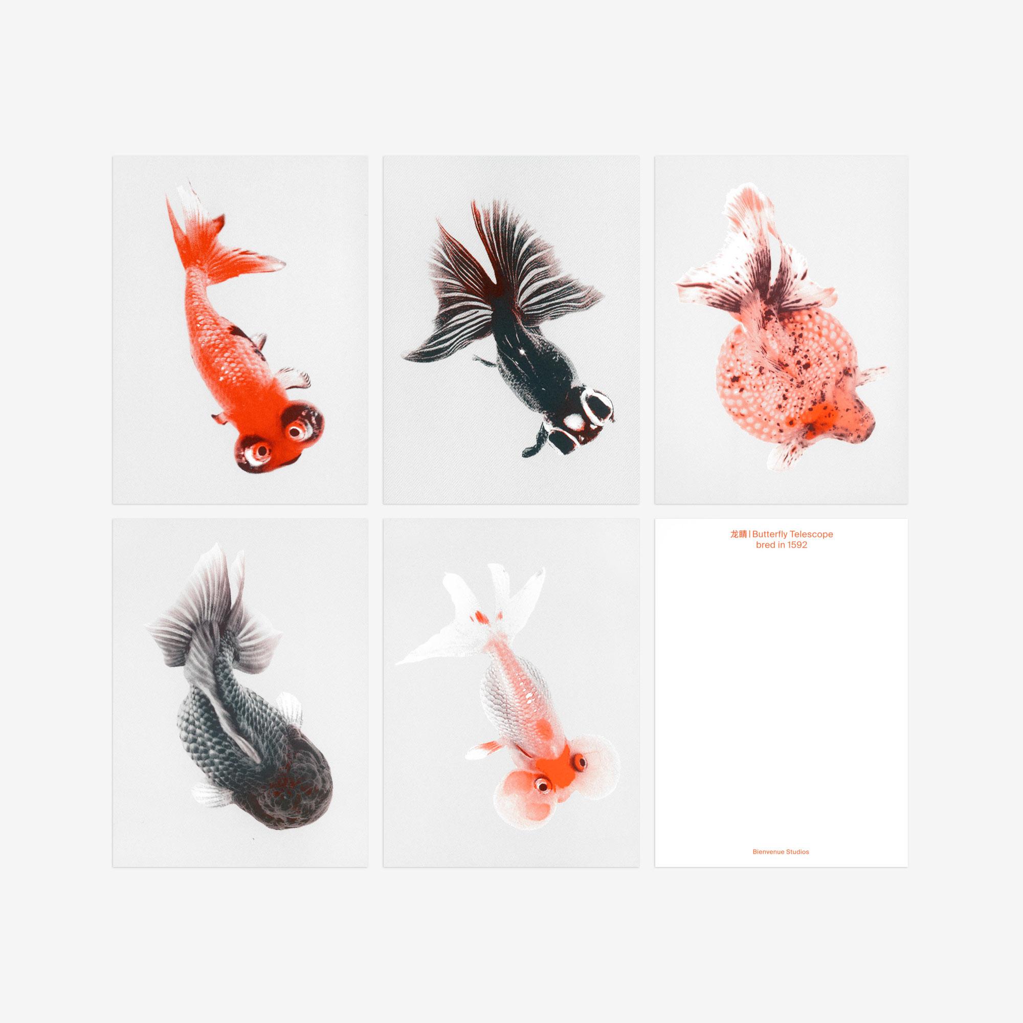 Special goldfish postcards