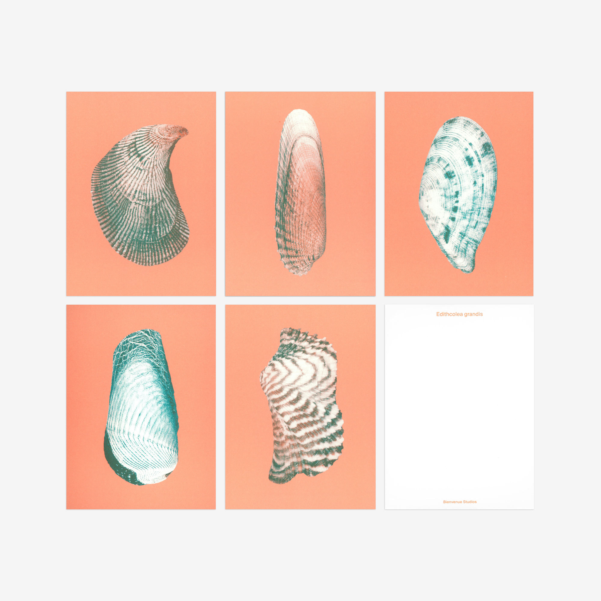 pink seashell postcards