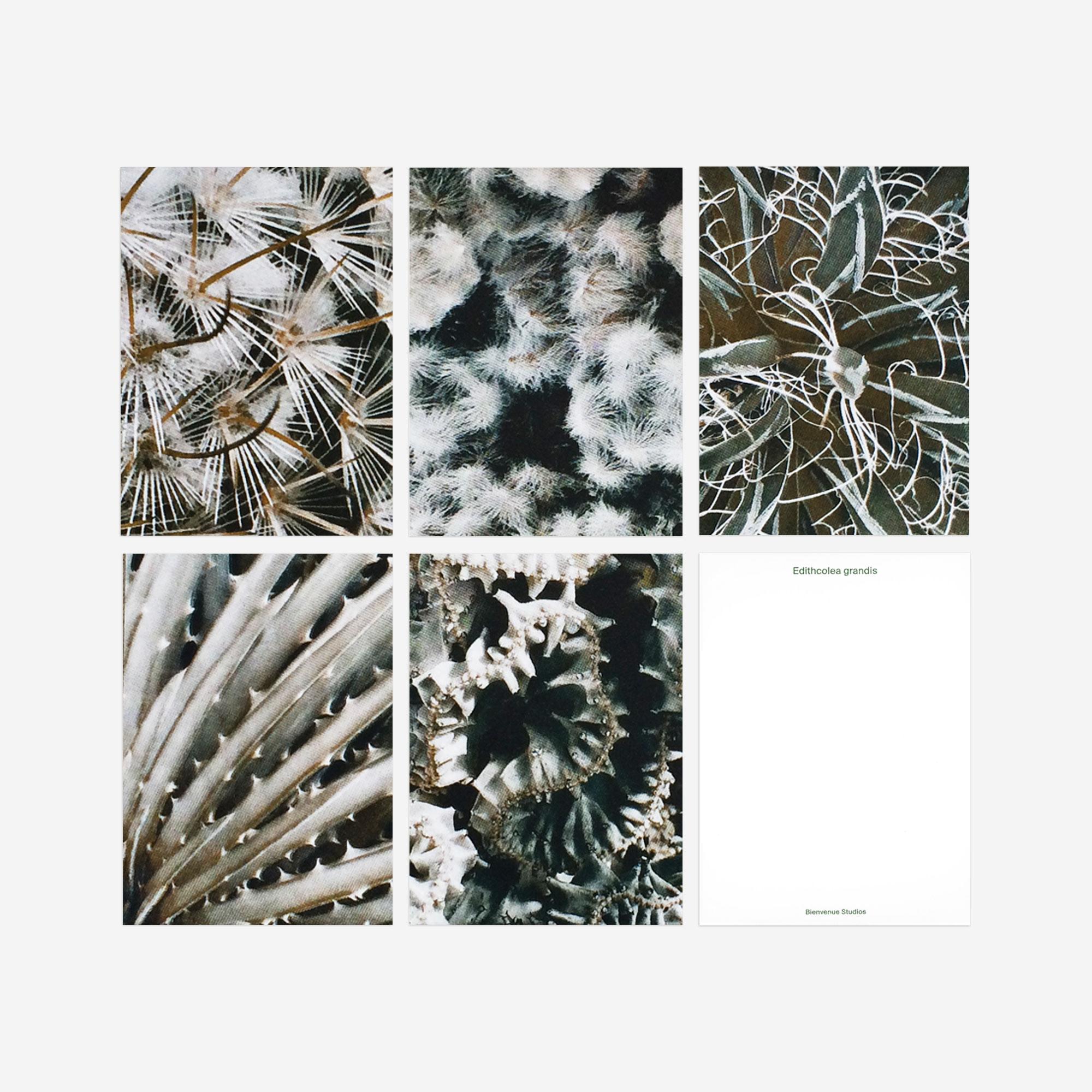 succulent plant postcards